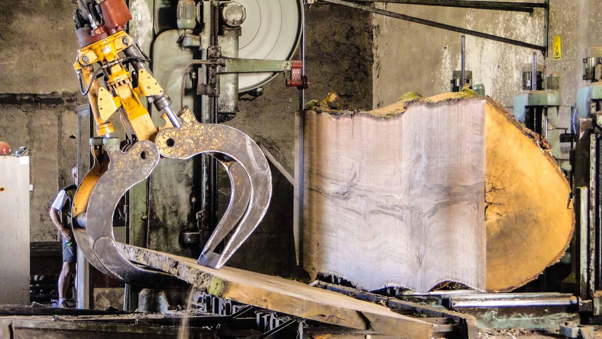 Baumriese Eiche im Sägewerk Ernst Schwarz Holzhandel