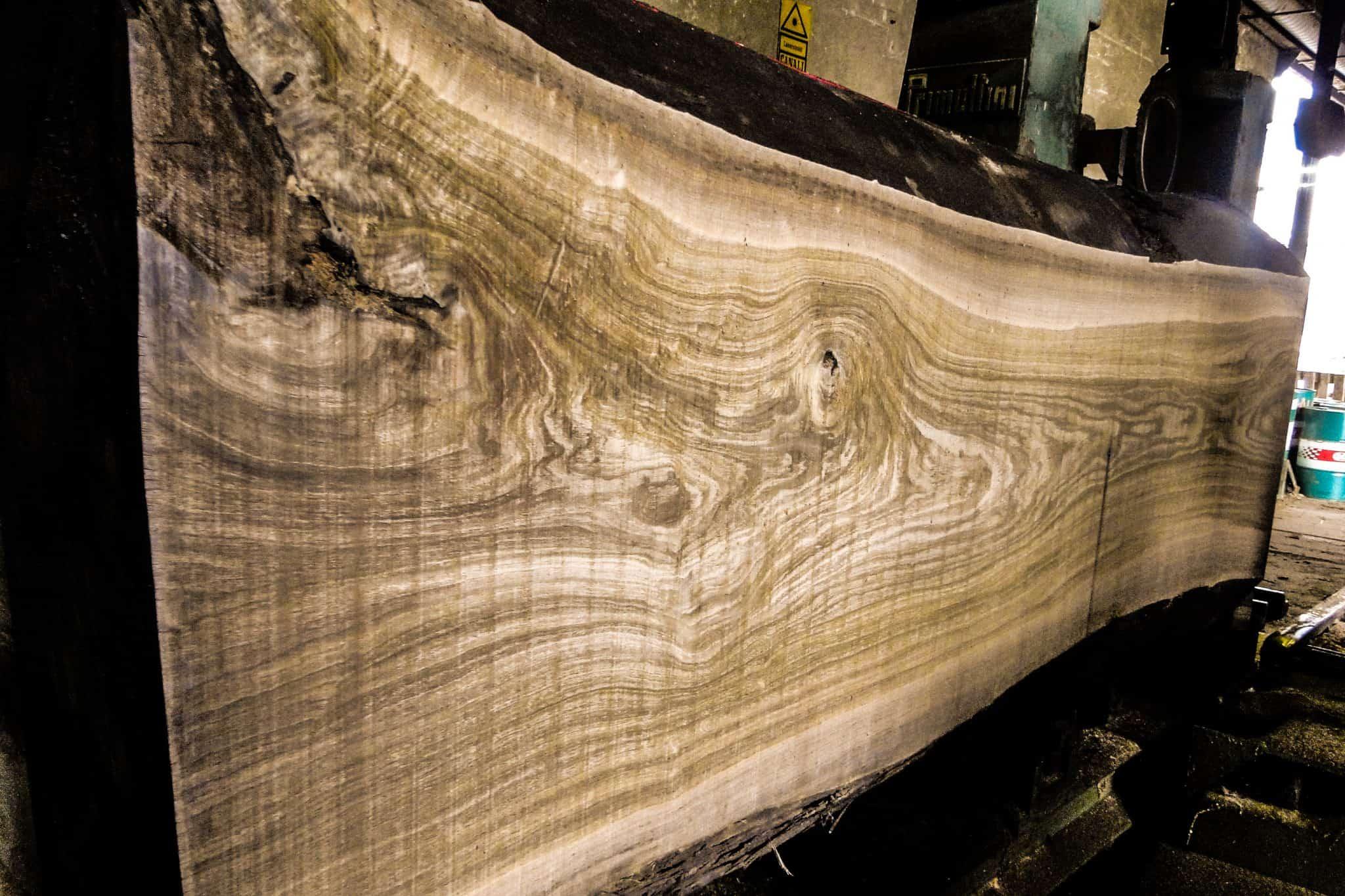 Holzschnitt eines Baumriesen im Sägewerk