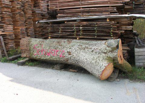 Birne Furnierstamm Ernst Schwarz Holzhandel